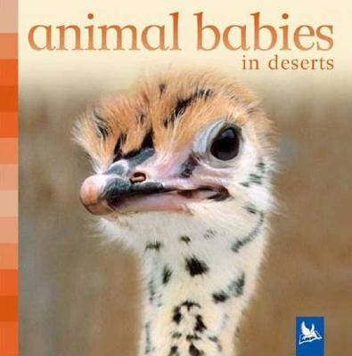 Animal Babies in Deserts By Nicholson, Sue